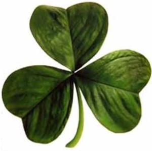 "The shamrock is so associated with the Emerald Isle that it is sometimes called ""Irish clover."" Photograph by George McFinnigan, courtesy Wikimedia. CC-BY-SA-3.0"