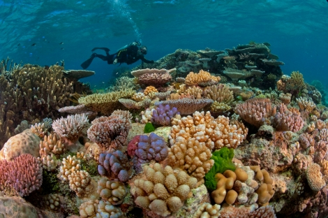Photograph of the Great Barrier Reef by David Doubilet, National Geographic