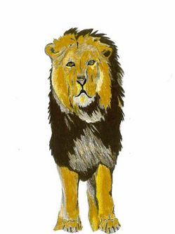 letters-to-lions-drawings-2-46_31233_600x450.jpg