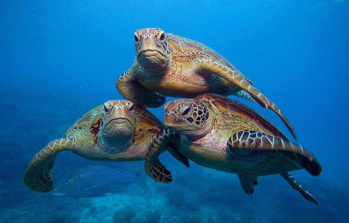 морские животные австралии картинки личной жизни