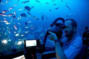 """Brecas"" surround the DeepSee submarine as Neil Gelinas films them.Photograph by Enric Sala"