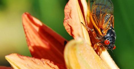Cicada - 2011-06-01_42283_outdoor-scene.jpg