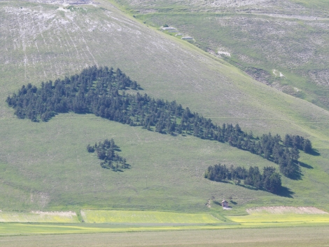 This pine grove in Castelluccio di Norcia has been landscaped into the shape of Italy. Photograph by Peter Zagar