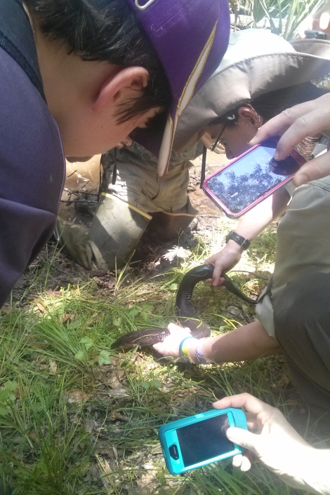 Citizen scientists snap photos to upload to Project Noah. Photo by Christina Riska, NG Education