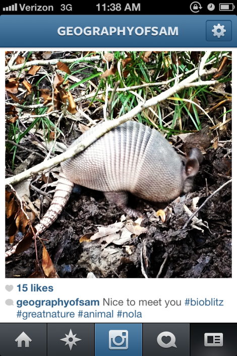Contributing to the Great Nature Project is easy. Here's a photo I snapped of an armadillo outside of New Orleans, Louisiana. Add #greatnature to your photos of plants and animals to see them on our website.