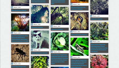 Great Nature Project website