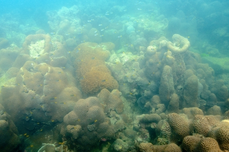 A coral reef in the Tung Ping Chau marine park in Hong Kong, 2013  (Photograph by Laurel Chor)