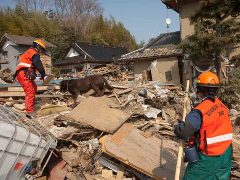 "A search-and-rescue team searches for bodies in the wreckage of the 2011 tsunami in Iwate Prefecture, Japan. A new device uses microwave technology to detect heartbeats amid the rubble. The dogs are more precise than the device, however. ""The dogs are useful because they can go and find exactly where that person is. If there's no one in that pile, we can save the [dog's energy] for another area where someone actually is,"" says John Price, a program manager in the Department of Homeland Security's (DHS) Science and Technology Directorate.  Photograph by Michael S. Yamashita, National Geographic"