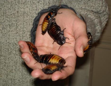 Roachies
