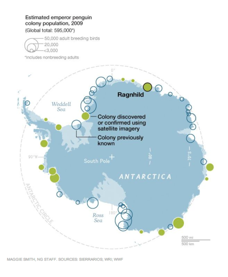Satellite imagery has helped researchers identify more than 10 new emperor penguin colonies—more than 15,000 birds—in Antarctica. Map by Maggie Smith, National Geographic