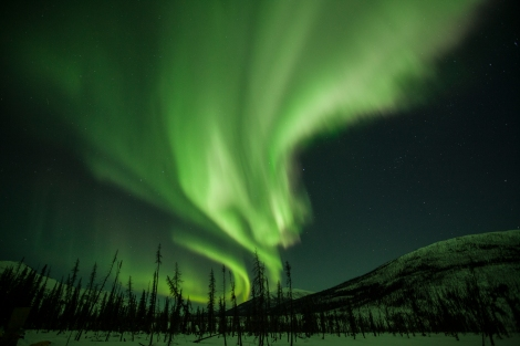 The Northern Lights (aurora borealis) streak the skies above Alaska's taiga. Photograph by Mark Thiessen, National Geographic