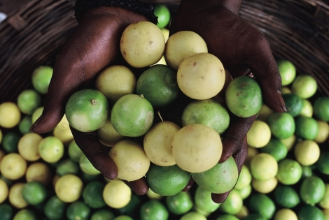 The price of limes has more than doubled in the past year. Photograph by Colin Roohan, Your Shot