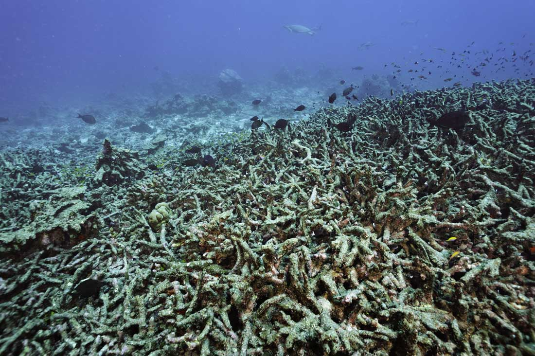 how to get rid of coral bleaching
