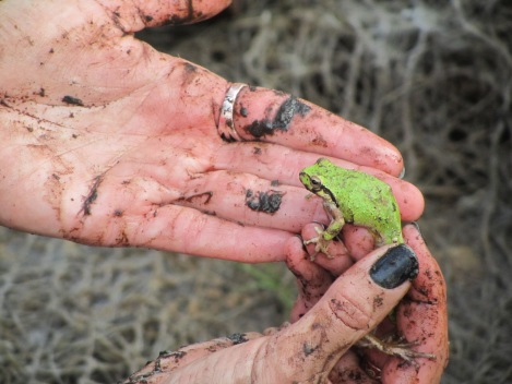 Valarcel shows off one of the Marin Headlands' green tree frogs.  Photograph by Stuart Thornton, National Geographic