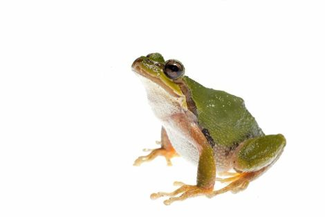 This frog was one of nine amphibian species recorded. Photograph by Clay Bolt