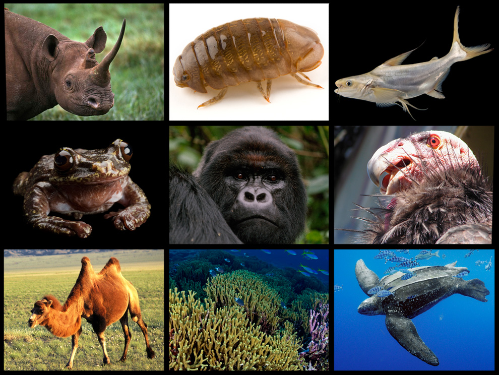 a discussion of endangered species and environmental problems There is/was a problem with your internet connection please note that some features may not function properly please refresh your browser if your internet.