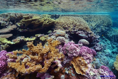 Coral gardens are found around the islands of the monument. Photograph by Kydd Pollock, courtesy U.S. Fish and Wildlife Service.  This file is licensed under the Creative Commons Attribution 2.0 Generic license.