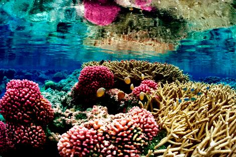 Corals provide a rich, biodiverse habitat for fish, crustaceans, and other marine creatures. Photograph by Jim Maragos, courtesy U.S. Fish and Wildlife Service. This file is licensed under the Creative Commons Attribution 2.0 Generic license.