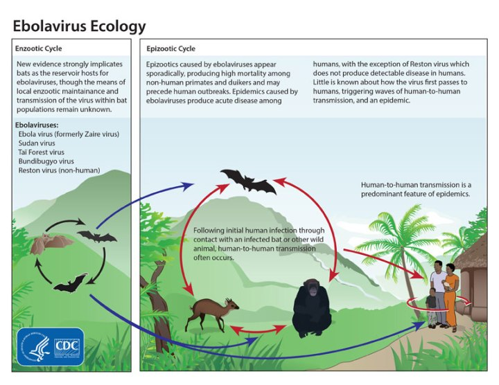 Illustration by the Centers for Disease Control and Prevention