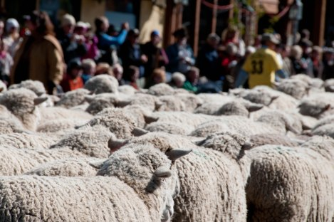 "The sheepherding migration route in Idaho passes right through the town of Ketchum, which celebrates the annual autumn migration to the foothills with a ""Trailing of the Sheep"" festival. Photograph by Rob Crow, courtesy Flickr. This image is licensed under the Creative Commons NonCommercial-ShareAlike 2.0 Generic license."