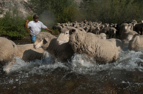 The herds—and the herders!—endure migration across mountains, valleys, and streams like this one. Photograph by Matt Moyer, National Geographic