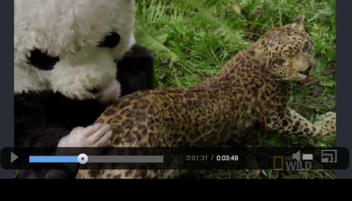 "People in giant panda costumes coat a stuffed leopard in feces and urine. Science is serious business. Image courtesy National Geographic's ""Destination Wild"""