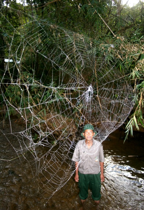 A man looks at the giant web of an orb spider. The spiders, which can string webs across streams, is native to the highland rainforest of Madagascar. Photograph by Matjaz Kuntner