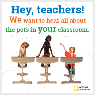Tell us about your class tails... and how these creatures are helping you teach!