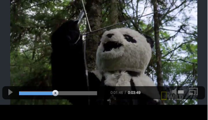 "Even pandas participate in citizen science projects. Image courtesy National Geographic's ""Destination Wild"""
