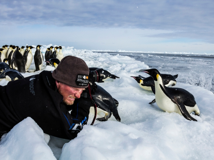 Penguins are probably not too stressed out by Nat Geo photographers by this point. Photograph by Paul Nicklen, National Geographic