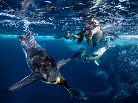 Photograph of emperor penguins in the Ross Sea by Paul Nicklen, National Geographic