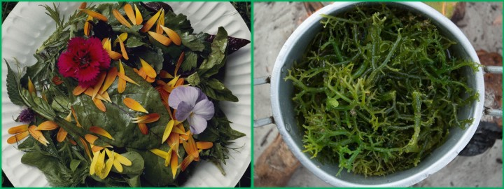 Would you start off with a floral salad from Washington, served on a paper plate? Or maybe a fresh seaweed salad steamed on a Hawaiian beach? Photograph by Sam Abell (left) and Matthieu Paley (right), National Geographic