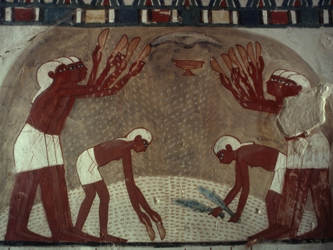 This gorgeous painting depicts the winnowing of grain, an early (and still-reliable) agricultural technique practiced in Egypt more than 3,000 years ago. This painting is from the Tomb of Nakht, in Thebes, Egypt, dated to about 1400 BCE. Photograph by Thomas J. Abercrombie, National Geographic