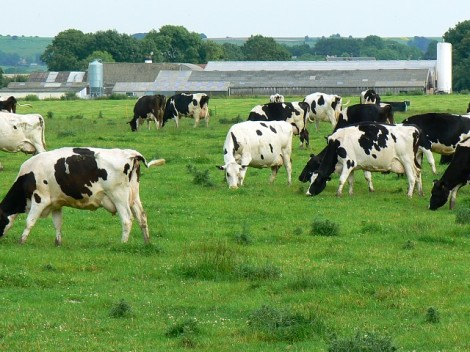 The classic image of a dairy farm