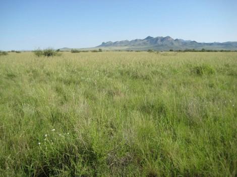 Photo of grassland.