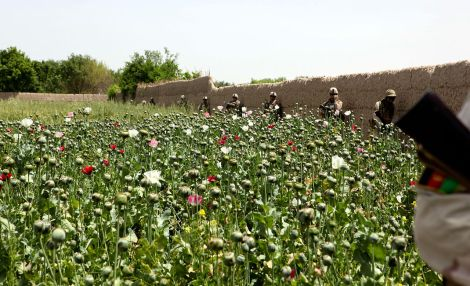 At times, the U.S. military helped eradicate Afghanistan's primary cash crop, opium, but at other times, the official policy was to permit opium production precisely because it was so vital to the country's economy. Learn more about Afghanistan's opium wars in this article. Here, U.S. Marines and Afghan National Army soldiers patrol farmland outside Patrol Base Shark, in Helmand Province. Photograph by Corporal Marco Mancha, 2nd Marine Division, courtesy Wikimedia.