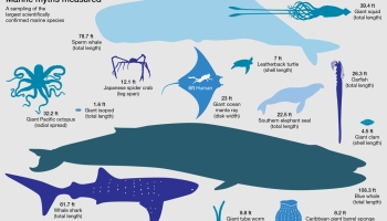 How big is a whale?