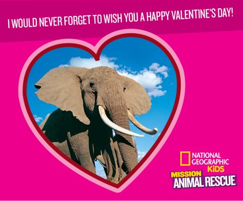 Mission: Animal Rescue Elephants
