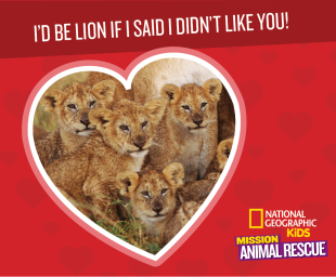 Mission: Animal Rescue Lions