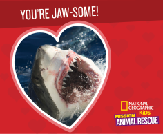 Mission: Animal Rescue shark