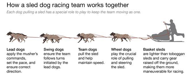 The Alaskan Spirit -Dog Rp- - members