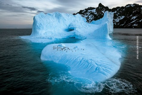 Photo by Paul Nicklen.