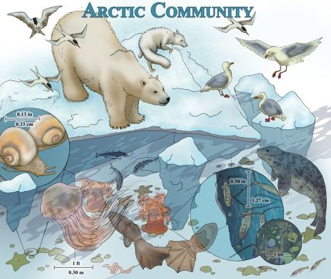 Click here for more information on this and other marine communities—including a labeled guide to this illustration. Illustration by Doris Dialogu, National Geographic