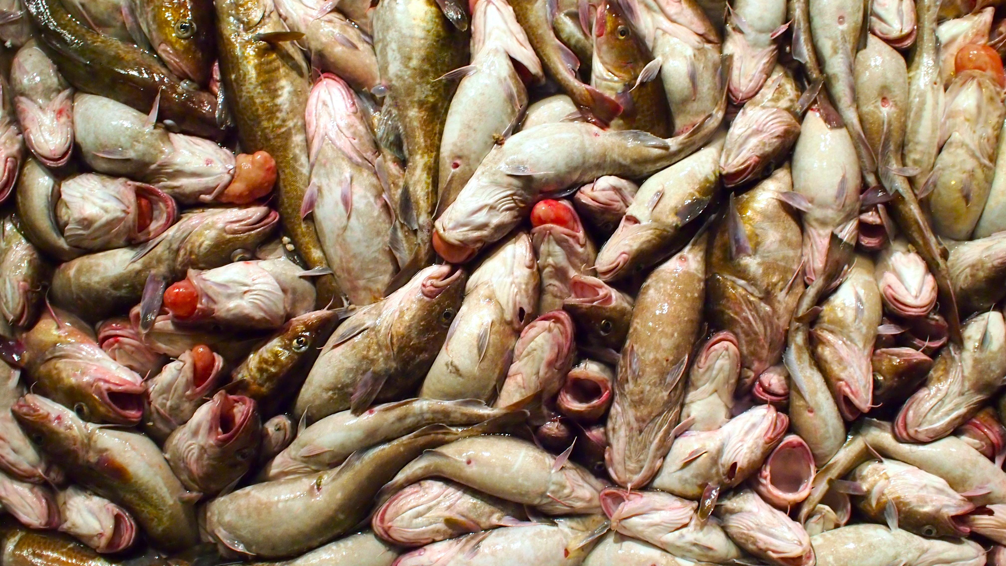 Methylmercury in fish fdating