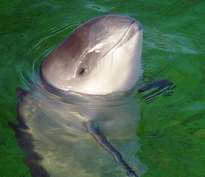 The Porpoise of Echolocation – National Geographic Education