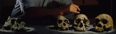 hominidki