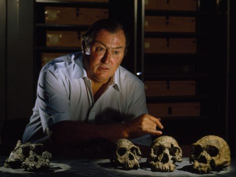 Richard Leakey displays four skulls spanning 300,000 years of hominin evolution in East Africa. On the left is a fossil of Paranthropus aethiopicus, a distinct branch on the hominid family tree. On the right are a Homo habilis, Homo erectus (my favorid hominid!), and Homo rudolfensis, early ancestors to our own species, Homo sapiens sapiens. Photograph by Kenneth Garrett, National Geographic