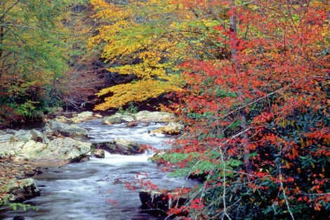 Great Smoky Mountains National Park: Why would anyone want to visit this? Photograph by National Park Service