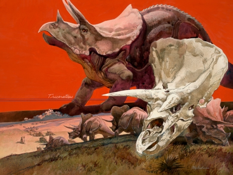 "The 590-kilogram (1,300-pound) fossilized skull of a triceratops nicknamed the ""Dragon King"" is expected to fetch about $2 million at auction. Illustration by Roy Andersen, National Geographic"