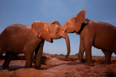 Photograph by Michael Nichols, National Geographic
